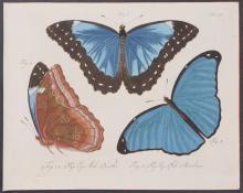 Jablonsky - Butterflies or Moths. 24