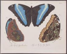 Jablonsky - Butterflies or Moths. 25