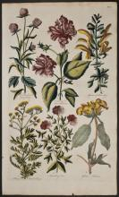 Hill - Hibiscus, Sage, Tanzy, Phlomis. 6