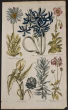 Hill - Marygold, Crinum, Purslain, Calla, Protea, Geranium. 7