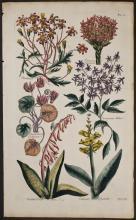 Hill - Senecio, Crassula, Cyclamen, Coral Aloe, Hyacinth. 21
