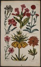 Hill - Carnation, Tobacco, Campion, Garden Pink, Crown Imperial Lily, Anemone. 43