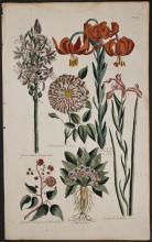 Hill - Asphodel, Rose, Lily, Iris, Mandrake, Bramble. 46