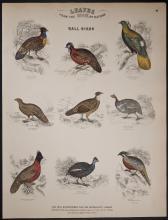 Jardine - Call Birds - Grouse, Ptarmigan