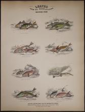 Jardine - Fish - Perches