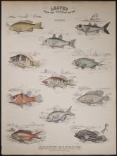 Jardine - British Fish. 5