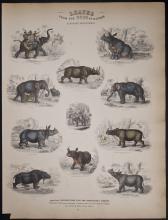 Jardine - Elephant, Rhinoceros. 15