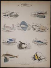 Jardine - Fish - Flying Fish, Mola or Sun Fish. 17
