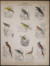 Jardine - Birds of Western Africa. 18
