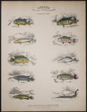 Jardine - Fishes of Guiana. 22
