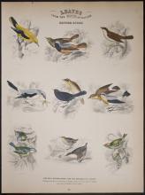 Jardine - British Birds. 26