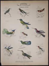 Jardine - Hummingbirds. 28
