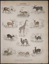 Jardine - Deer, Camel, Giraffe, Moose. 31