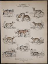 Jardine - Dogs. 43