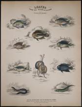 Jardine - Fishes of Guiana. 44