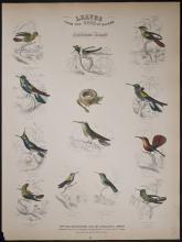 Jardine - Hummingbirds. 50