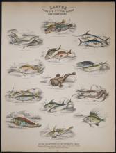 Jardine - British Fishes. 55