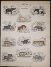 Jardine - Pachydermes - Pigs, Hogs. 57