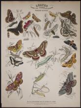 Jardine - Foreign Moths. 67