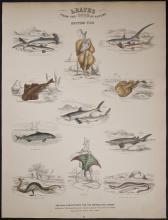 Jardine - British Fish. 74