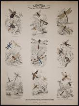 Jardine - Dragonfly, Insects. 77