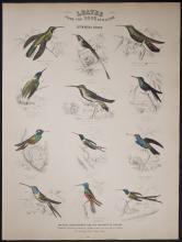 Jardine - Hummingbirds. 86