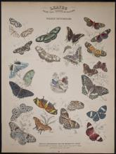 Jardine - Foreign Butterflies. 98