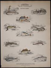 Jardine - British Fishes. 107