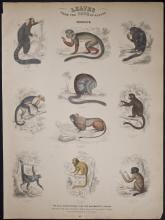 Jardine - Monkeys. 117