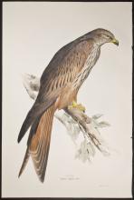 Gould & Lear - Kite