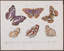 Jablonsky - Butterflies or Moths. 227