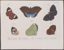 Jablonsky - Butterflies or Moths. 140