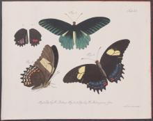 Jablonsky - Butterflies or Moths. 11