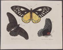 Jablonsky - Butterflies or Moths. 6