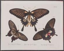 Jablonsky - Butterflies or Moths. 15