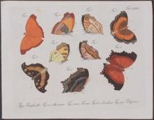 Jablonsky - Butterflies or Moths. 171