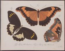 Jablonsky - Butterflies or Moths. 34