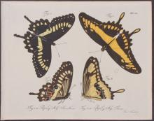 Jablonsky - Butterflies or Moths. 40