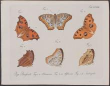 Jablonsky - Butterflies or Moths. 172