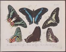 Jablonsky - Butterflies or Moths. 37