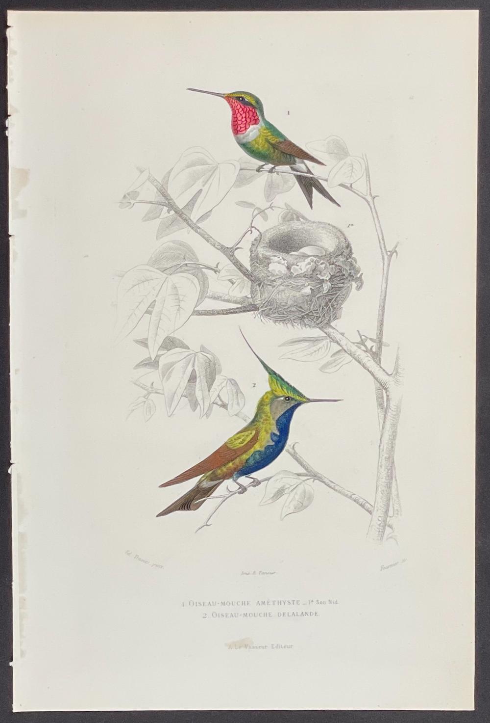 Buffon - Hummingbirds