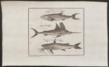 Salmon - Swordfish, Catfish, Fish