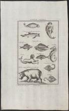 Salmon - Mermaid, Sea Monster, Seahorse, Ray, Hippopotamus, Fish