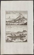 Salmon - Cape-Lizards