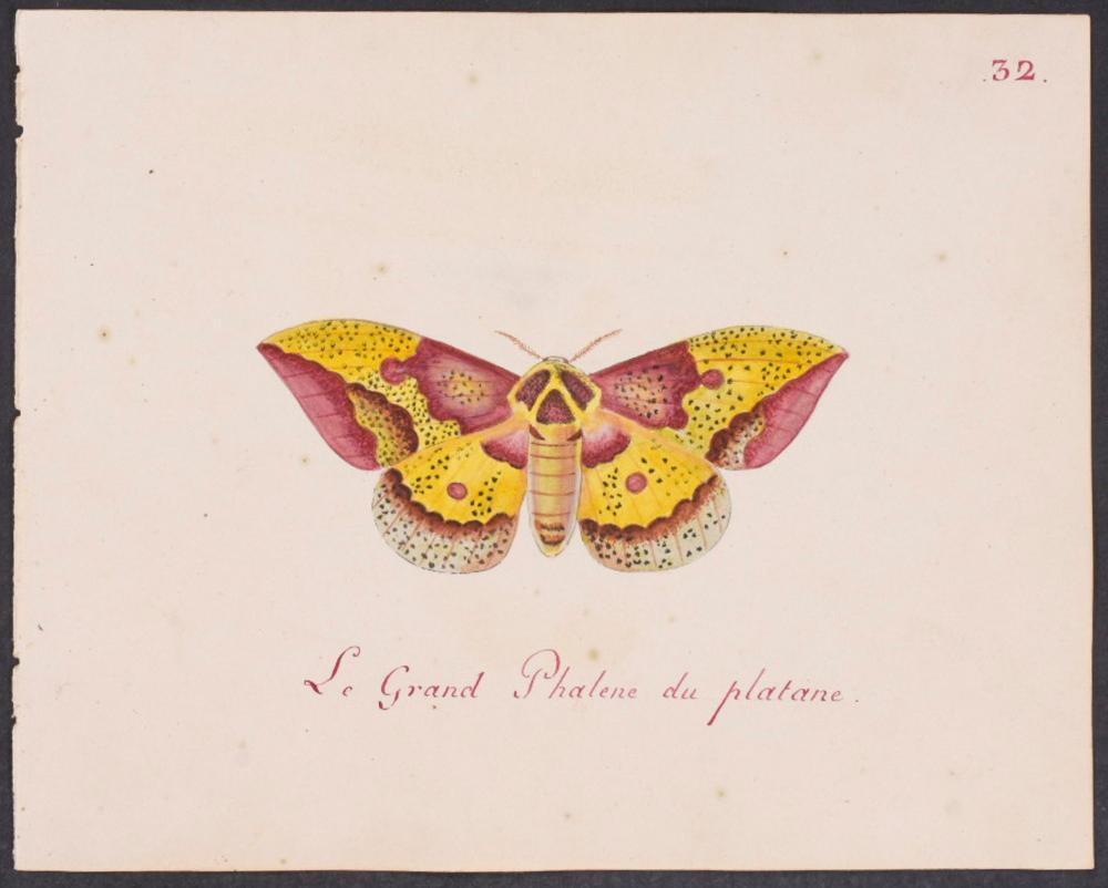 Abbot, Original Watercolor - Moth. 32
