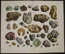 Seba - Fossils. 101