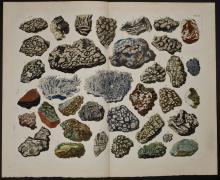 Seba - Fossils. 102