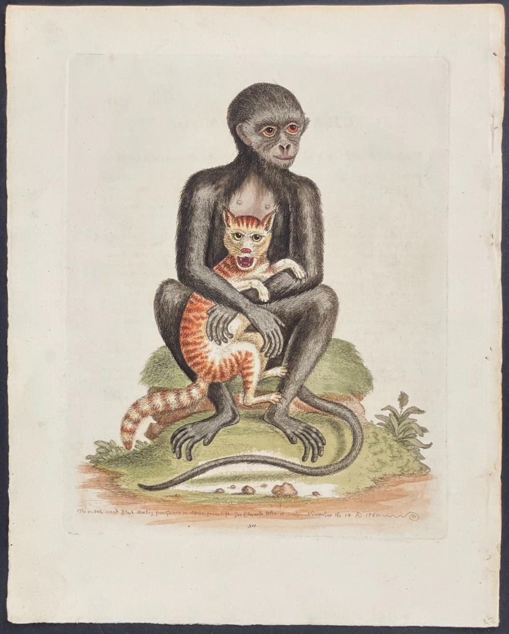Edwards - Middle-sized Black Monkey Holding Cat. 311