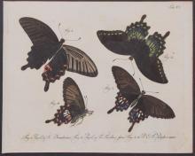 Jablonsky - Butterflies or Moths. 20