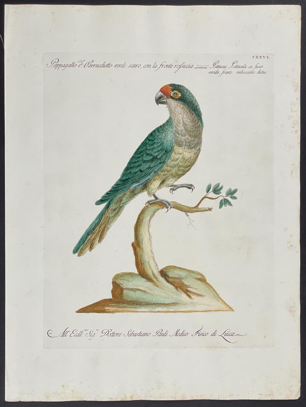 Manetti - Parrot. 126